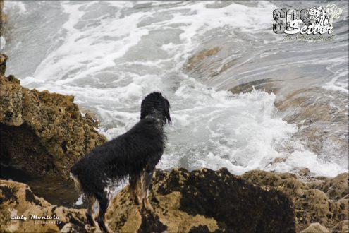 Perro observando el oleaje